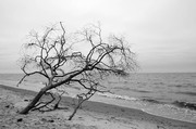 Windspuren im Darss - Monika Rossa - Annahme